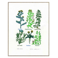 John Dilnot Some Weeds mini print