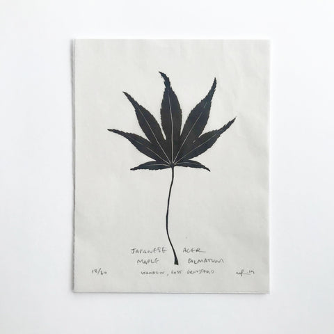 Tree Leaf Lino Print - Japanese Acer