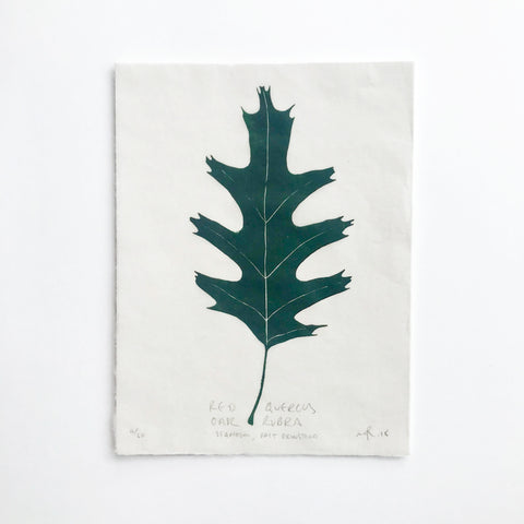 Tree Leaf Lino Print - Red Quercus