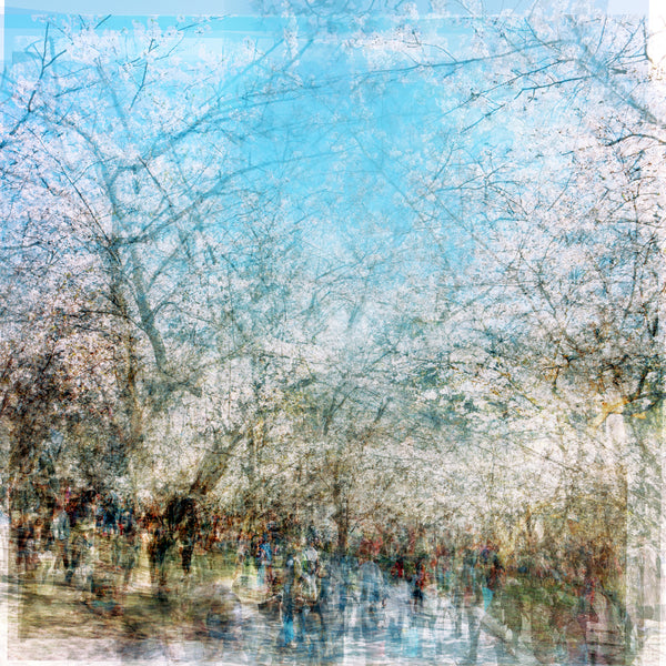 Chris Albert-high park blossoms