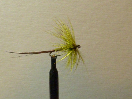 Hackled Olive Mayfly