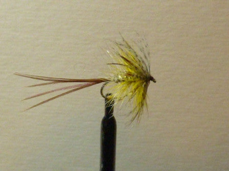 Hackled Mayfly