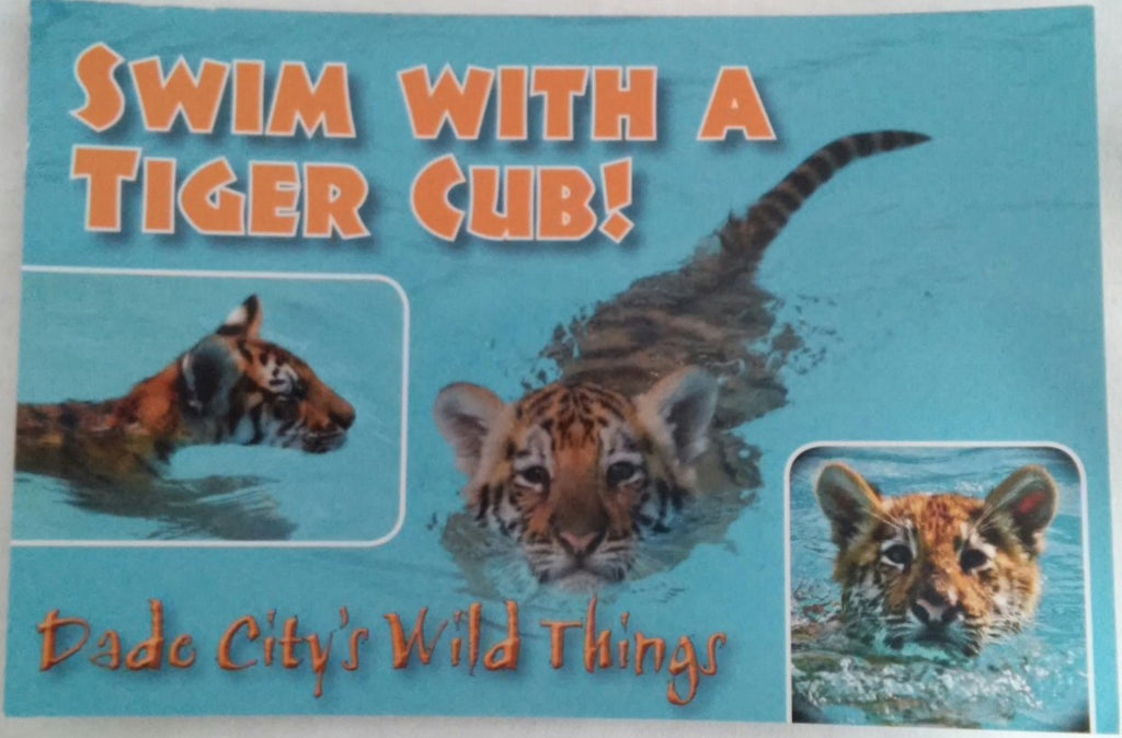 I Swam With A Tiger Postcard