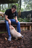Animal Encounter:  Class B - Pot Bellied Pig