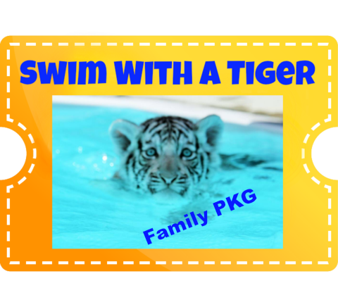 Swim with a Tiger family pkg