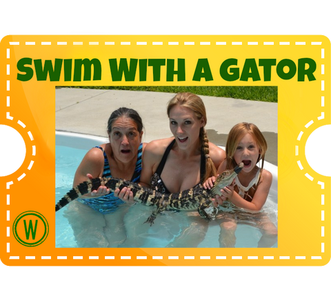 Swim with a Gator - Watcher