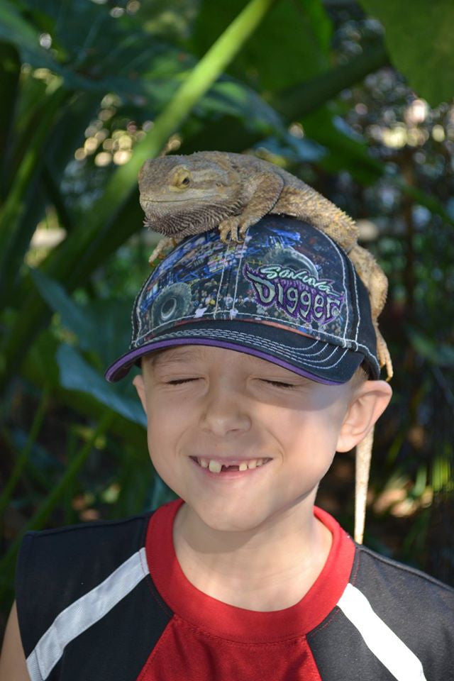 Animal Encounter:  Class B - Bearded Dragon
