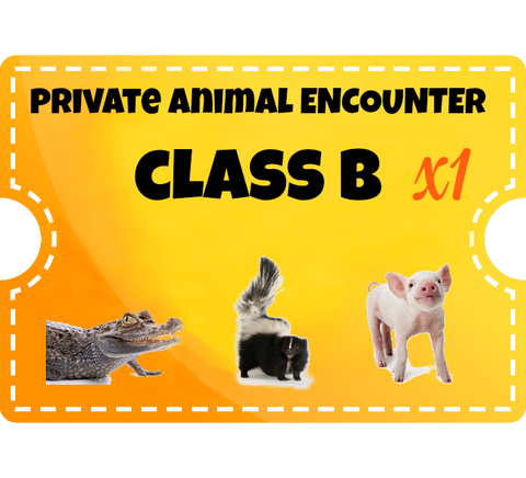 Private Animal Encounters - (additional guest) - Class B