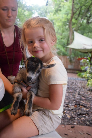 Animal Encounter:  Class B - African Pygmy Goat