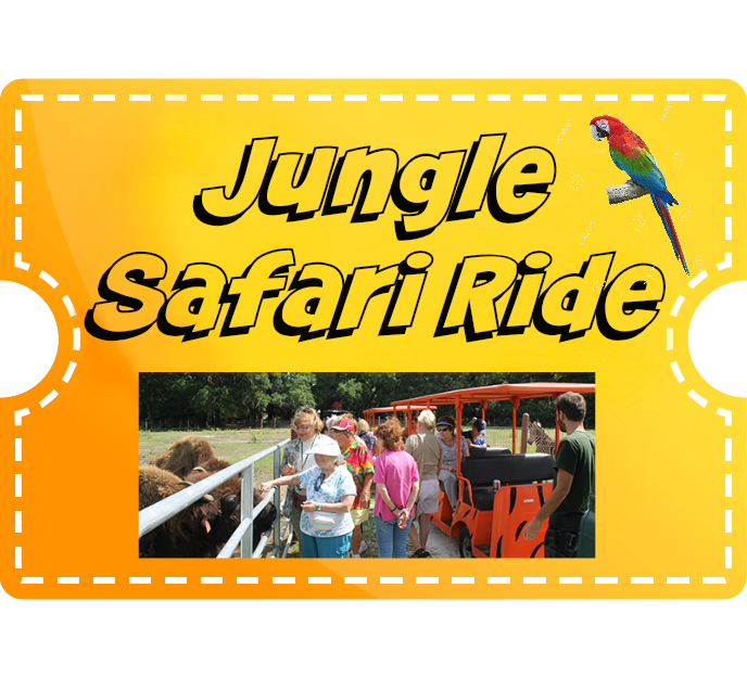 Jungle Safari Ride - Child (2-12)