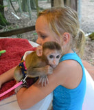 Animal Encounter:  Class A - Monkey