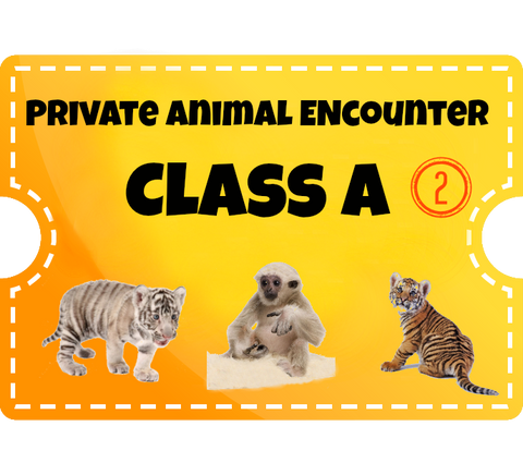 Private Animal Encounters for 2 - Class A