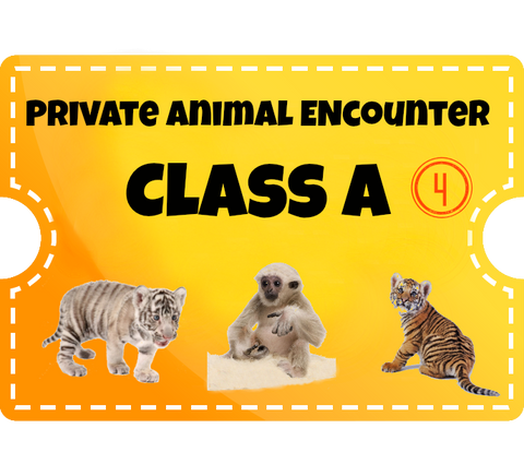 Private Animal Encounters for 4 - Class A