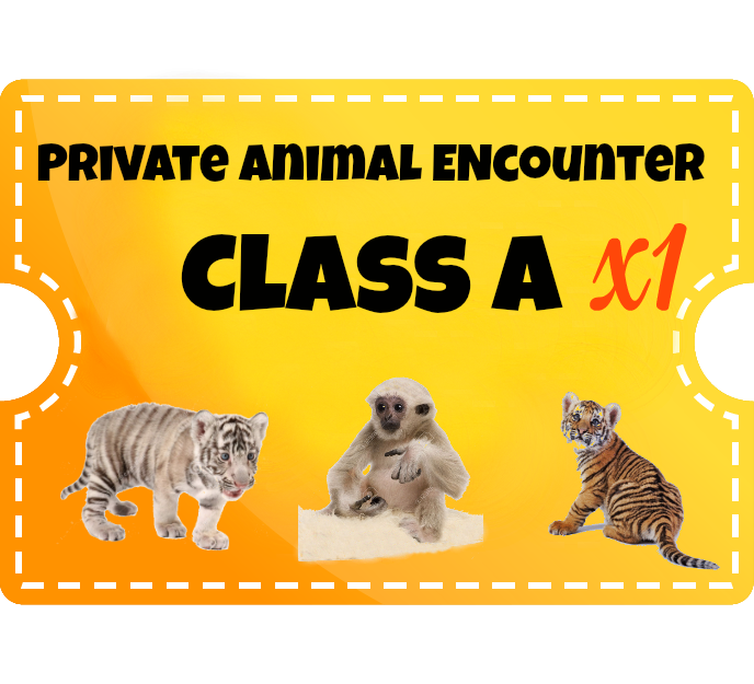 Private Animal Encounters - (additional guest) - Class A