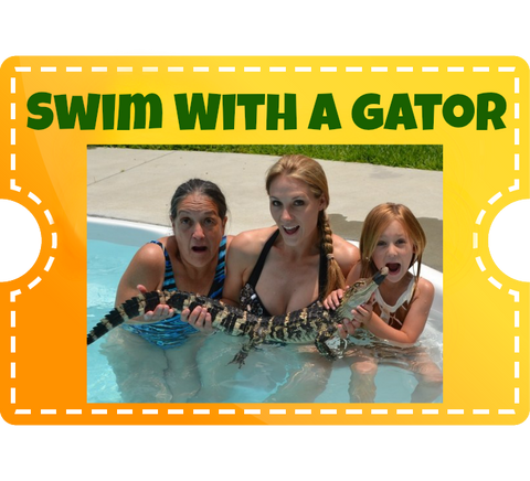 Swim with a Gator