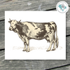 Farm Cow Print - Cow Printable Wall Art - These Bare Walls - 1