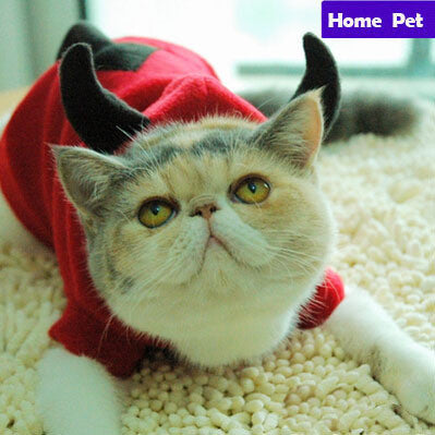 Holiday Cat Costume