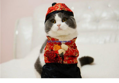 Cat Chinese New Year Costume