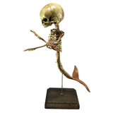 Vintage Fetus Mermaid Skeleton