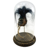 Shrunken Head with Hair in Bell Jar