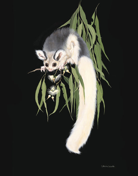 North Queensland Glider