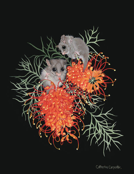 Pygmy Possums