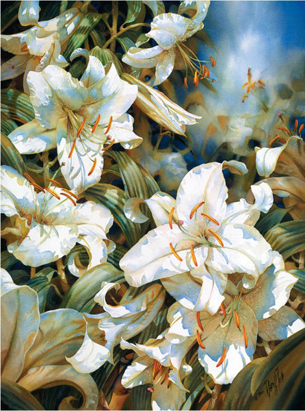 Casablanca Lillies