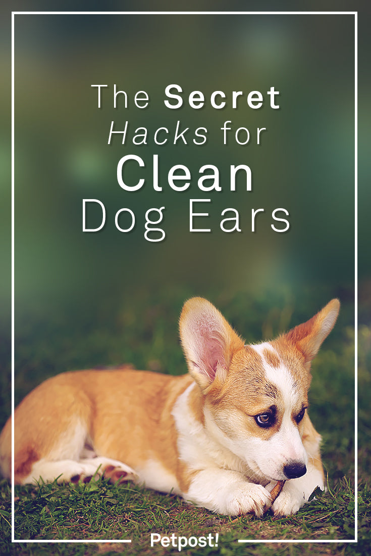 Hacks for Clean Dog Ears