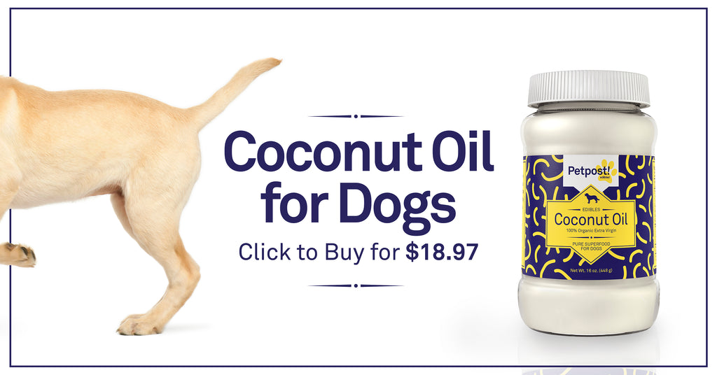 Coconut Oil for Dogs Click to Buy