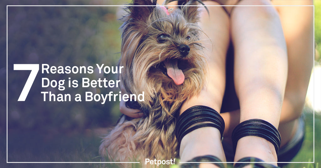 Reasons Your Dog is Better Than a Boyfriend Header