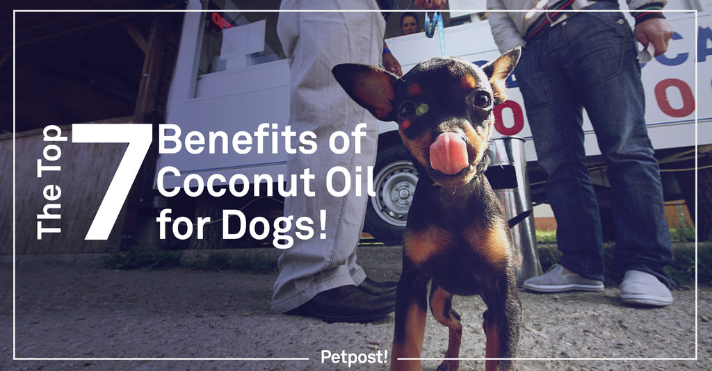 The Top Benefits of Coconut Oil for Dogs Banner
