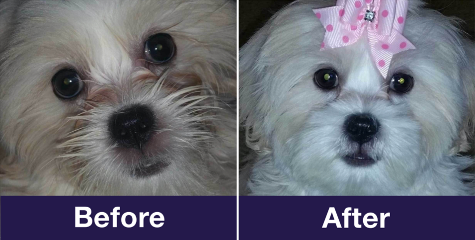 Dog Tear Stain Remover - Before After
