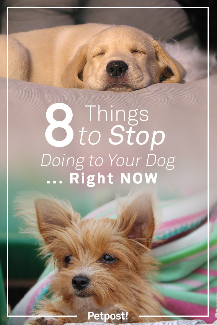 Things Your Dog Hates
