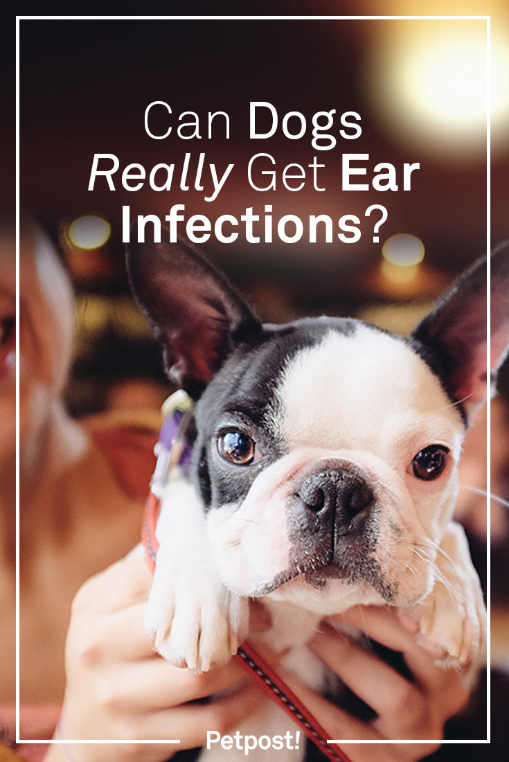 Can Dogs Get Ear Infections
