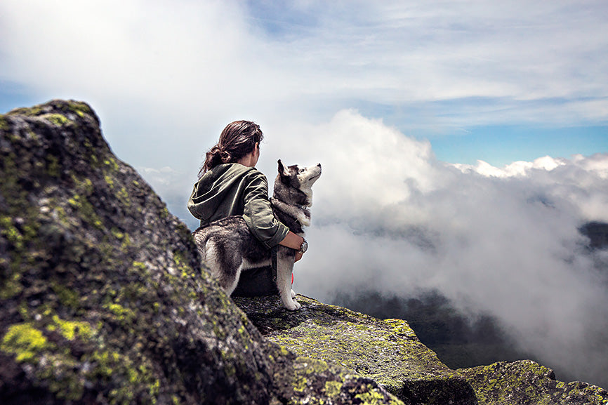 Husky on top of mountain with owner