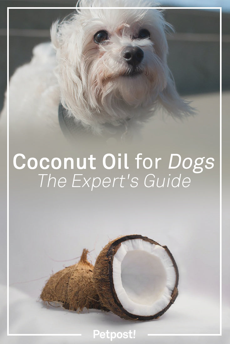Coconut Oil for Dogs Experts Guide