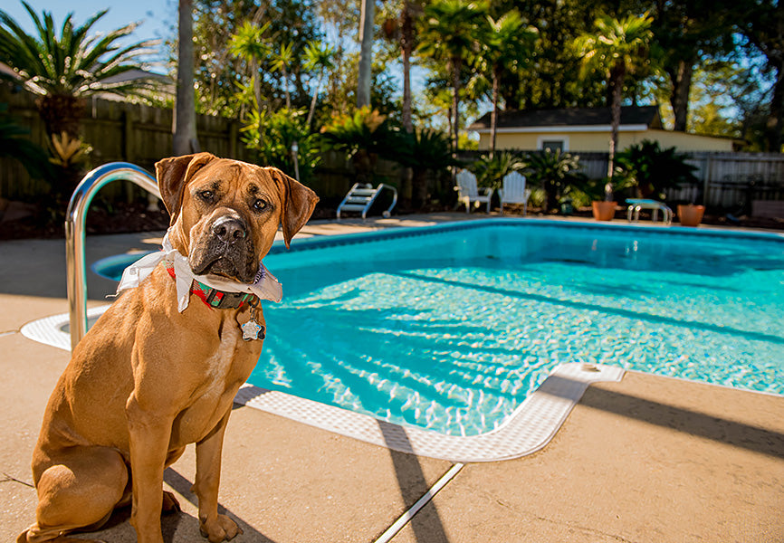 Dog in Front of Pool
