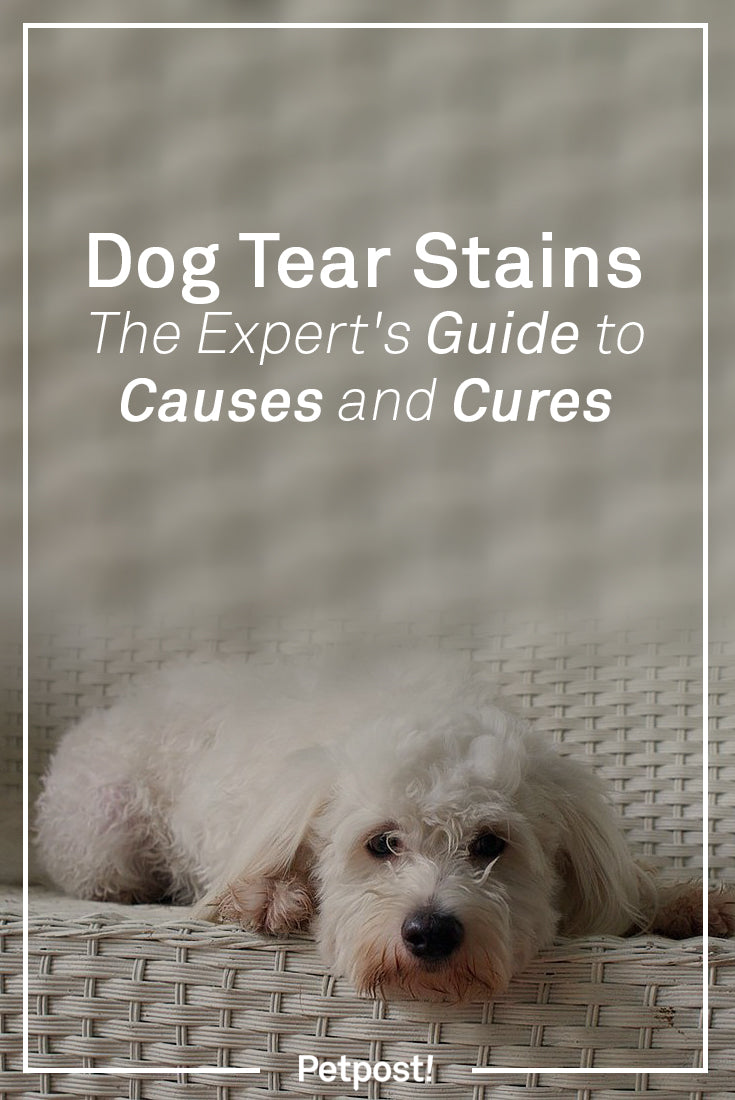 Causes and Cures for Dog Tear Stains