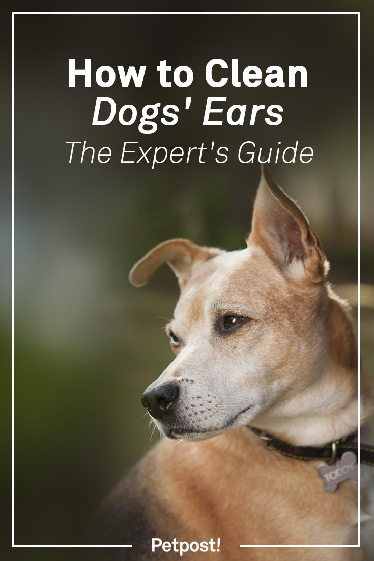 How to Clean Dogs Ears