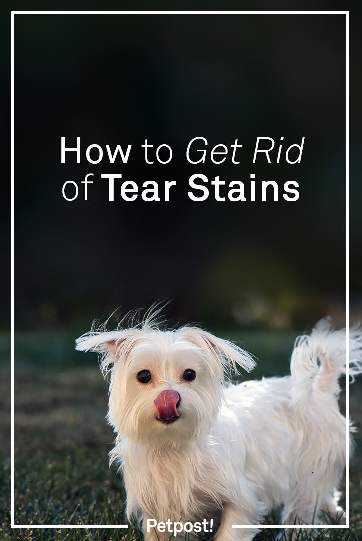 Removing Tear Stains