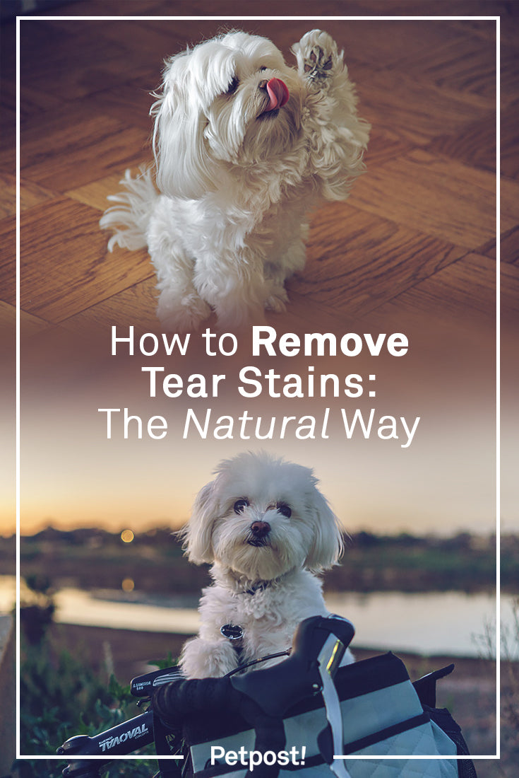 How to Remove Tear Stains Naturally