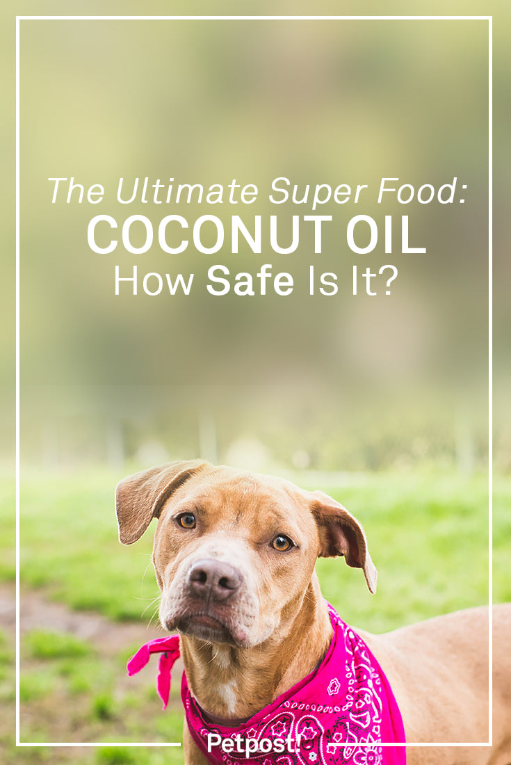 Coconut Oil Safety for Dogs