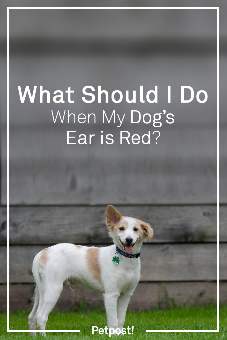 Dog's Ears Red