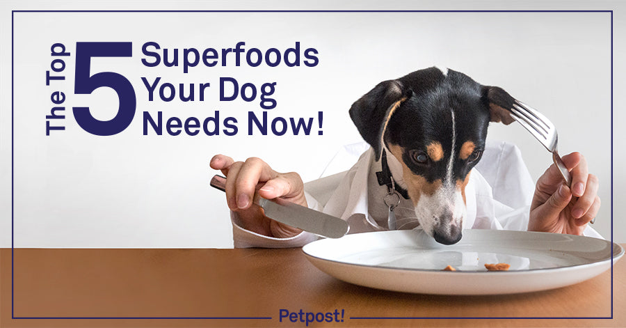 Superfoods for Your Dog