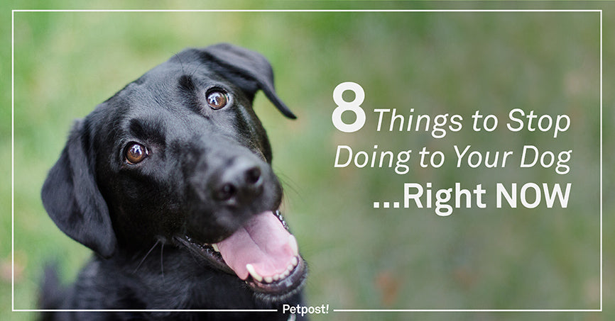 8 Things to Stop Doing to your Dog Right Now