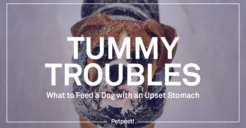 Tummy Troubles: What to Feed Dog With an Upset Stomach