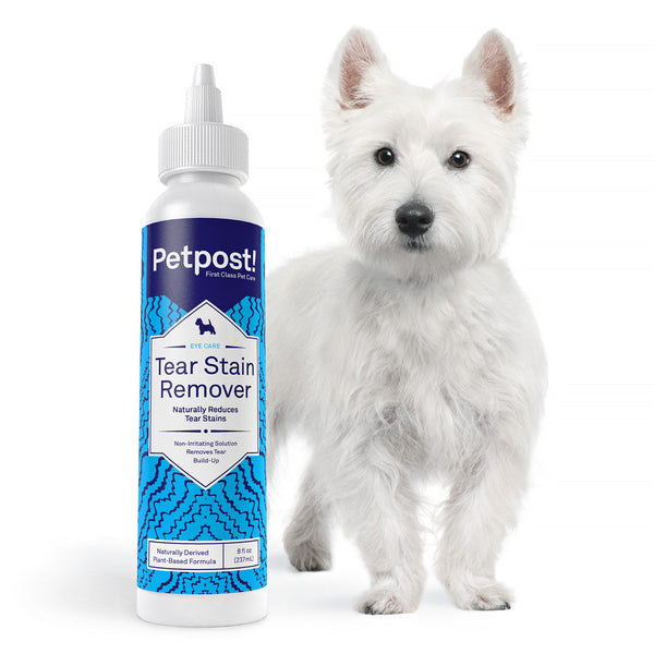 tear stain remover next to white westie
