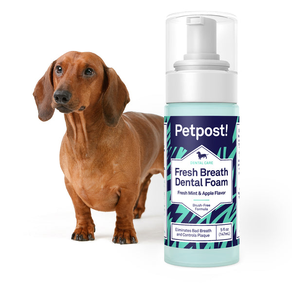 dachsund with petpost dental breath freshening foam for dogs
