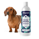 dachsund with teeth problems and bottle of petpost water additive