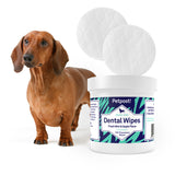 dachsund with petpost dental teeth cleaning wipes